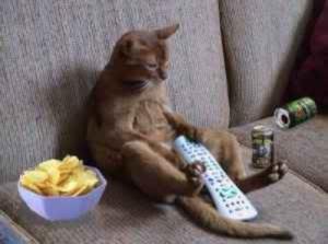relaxingcat02