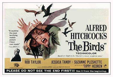 birds poster 2