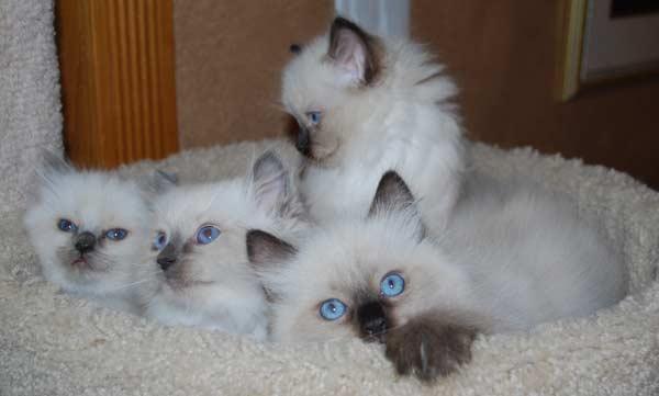 lexi-bellas-kittens-125